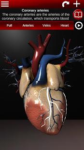 Circulatory System in 3D (Anatomy)