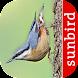 Bird Id - British Birds