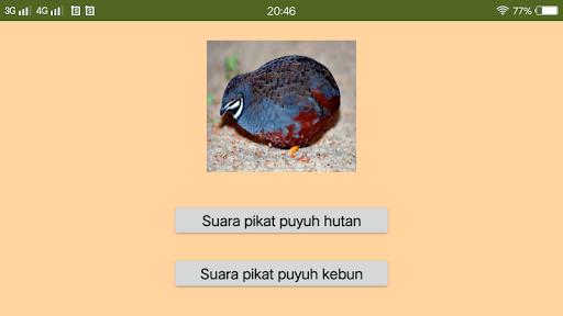 Suara Pikat Burung Puyuh App Store Data Revenue Download Estimates On Play Store