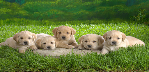 puppies wallpapers FHD 4K 2021 .APK Preview 0