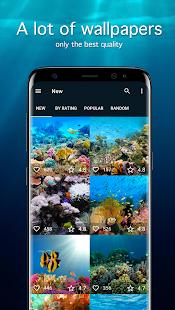 Fish Wallpapers 4K