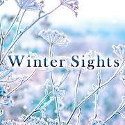 Beautiful Wallpaper Winter Sights Theme