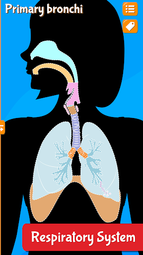Anatomix - Human Anatomy screenshots 7