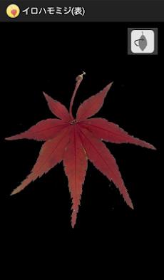 シンプル紅葉図鑑のおすすめ画像2