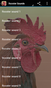 Rooster Sounds 2.0