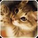 電池長持ち!動作サクサク!猫のメモリ解放アプリ【ねこサク】 - Androidアプリ