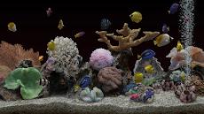 Marine Aquarium 3.3 PROのおすすめ画像2