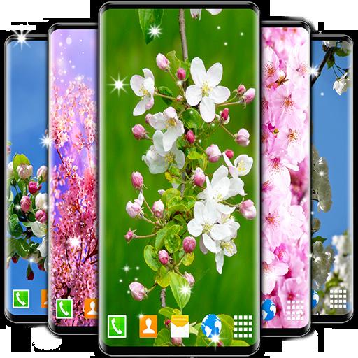 Cherry Blossom Live Wallpaper Spring Wallpaper Aplikasi Di Google Play