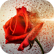 Gold Roses Live Wallpaper, Love Flowers Images Gif