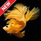 Wallpaper Ikan Cupang Download for PC Windows 10/8/7