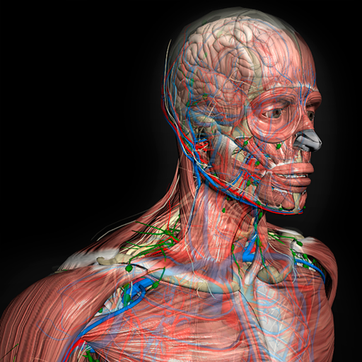 Baixar 3D Human Anatomy Introduction Software para Android