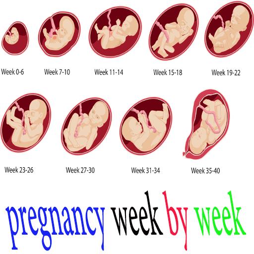 By pregnancy week week Pregnancy Week
