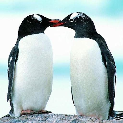 Penguins Jigsaw Puzzles apkdebit screenshots 2