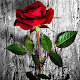 Download Rose Wallpaperes For PC Windows and Mac