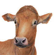 My Cattle Manager -Farming app