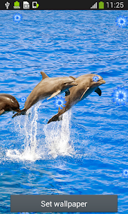 Dolphins Live Wallpapers 2.0 Mod APK Direct Download 2
