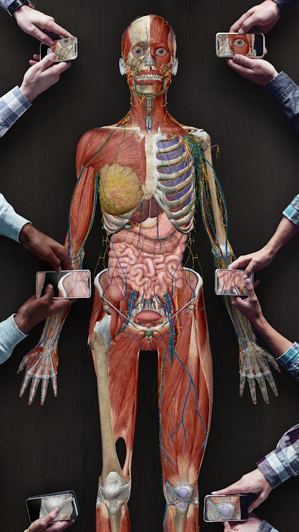 Human Anatomy Atlas 2021: Complete 3D Human Body  poster 6