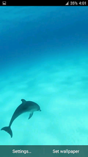 Dolphins HD. Video Wallpaper