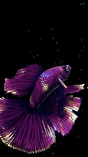 Betta Fish Live Wallpaper FREE 1.4 Screenshots 10