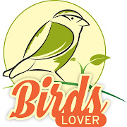 Birds Lover - Birds and Parrots Sale Purchase