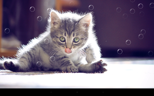 Funny Cat Live Wallpaper Screenshot