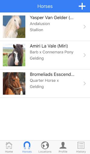 horse tracks screenshot 2