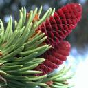 iForest – Bäume und Sträucher