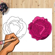 How to Draw Red Cabbage &Other Vegetables Easily APK