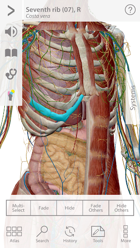Human Anatomy Atlas 7-Springer 7.5.01 Screenshots 1