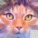 Pixel Art - Color by Number, Paint by Number, Free - Androidアプリ