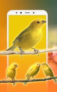 Best Bird Sounds, Calls & Ringtones 4