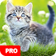 Cat Wallpapers PRO