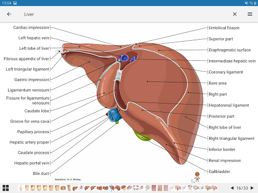 e-Anatomy 4.12.12 Screenshots 14