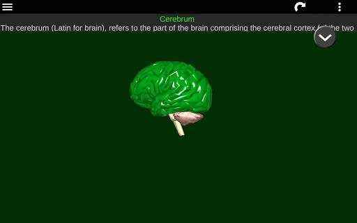 Internal Organs in 3D (Anatomy) 2.5 Screenshots 16