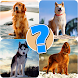 Dog quiz game - Androidアプリ