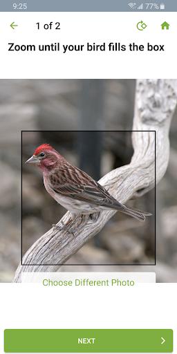 Merlin Bird ID by Cornell Lab screenshot 4