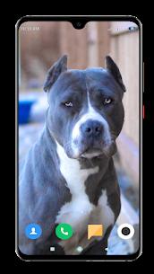 Pitbull Dog Wallpaper HD 4