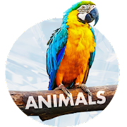 Animals Wallpapers - Free Backgrounds