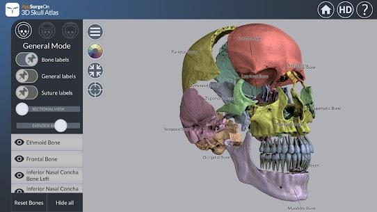 3D Skull Atlas 4