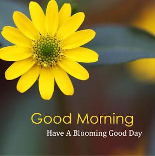 Good morning Flower Wallpapers Colorful Roses 4K 12.1.6 Screenshots 15
