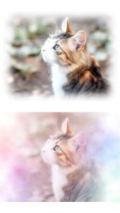 WataameCameraSoft Photo Editor Like For Pc | How To Download – (Windows 7, 8, 10, Mac) 2