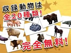 動物カード 子供向け図鑑 教育・知育・英語のおすすめ画像2