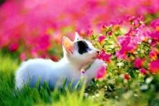 猫のジグソーパズルのおすすめ画像2