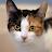 Talking Calico Cat