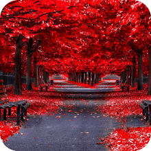 Autumn Wallpaper 4K Latest Download on Windows