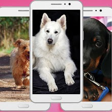 Cute Dog Wallpaper Apk - Animal Backgrounds Apss Download on Windows