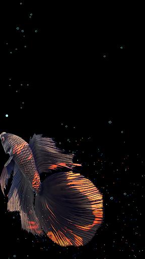 Betta Fish Live Wallpaper FREE 1.4 Screenshots 20