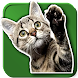 WAStickerApps Cats - Androidアプリ