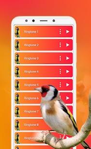 Best Bird Sounds, Calls & Ringtones 5