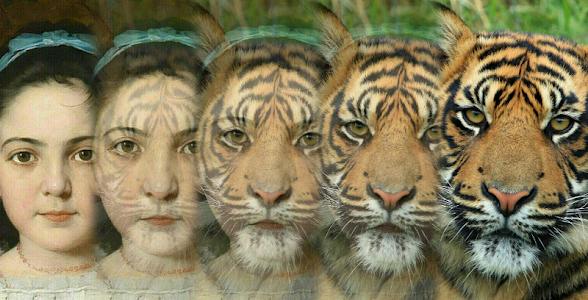 Zooface - GIF Animal Morph 1.4.4